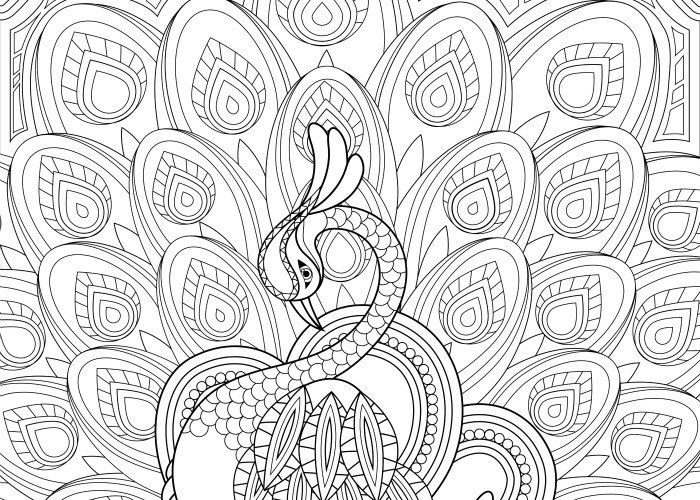 final peacock coloring page pic | Free Printables | Pinterest