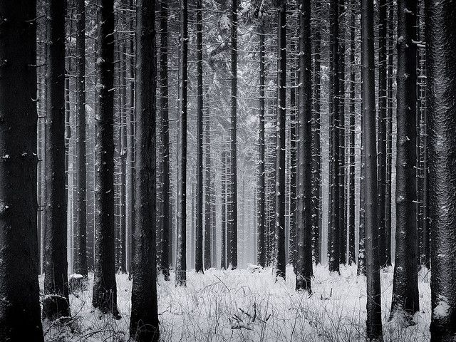 Countless Possibilities Snow Forest Dark Wallpaper Forest Wallpaper
