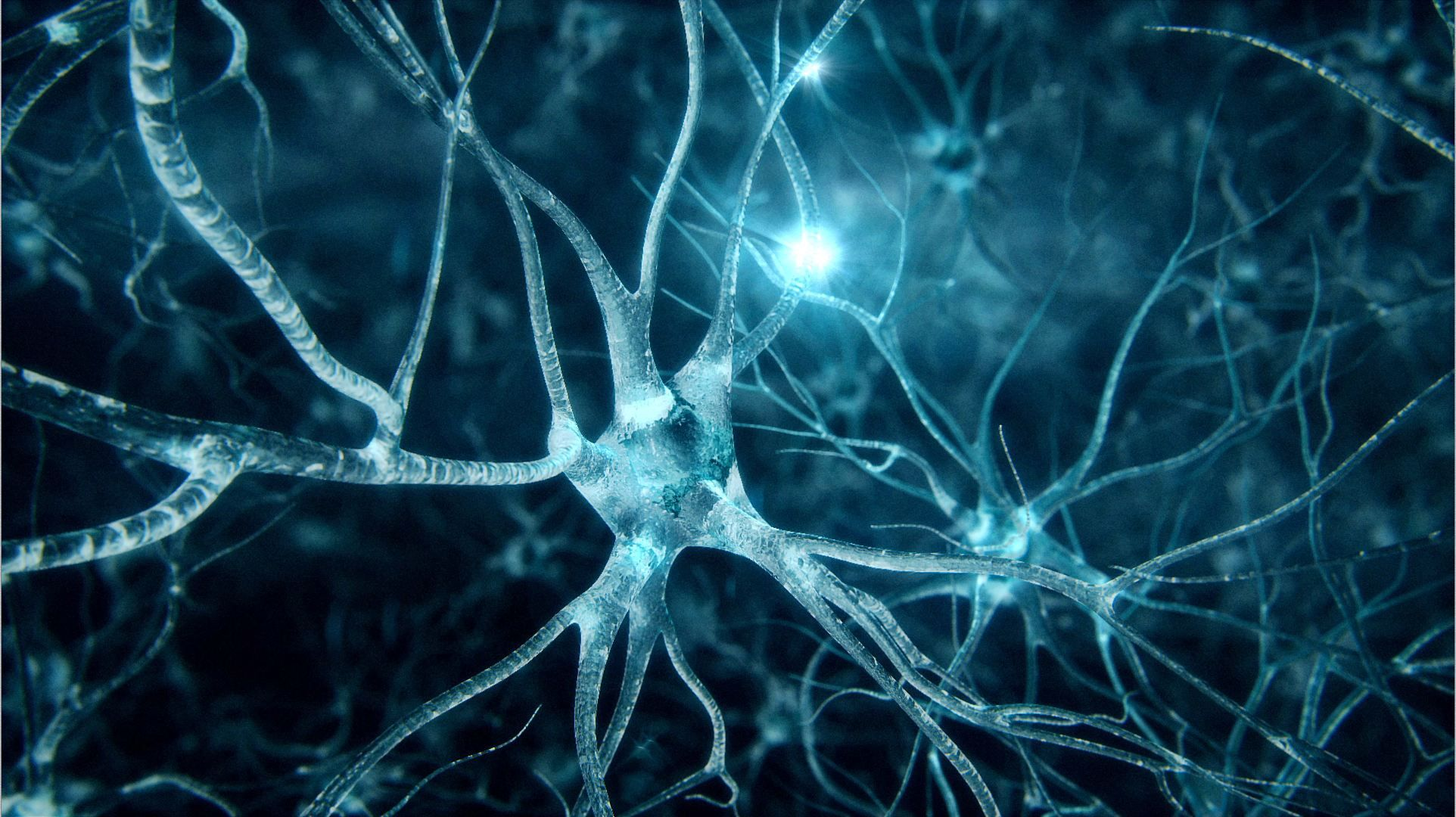 Medical visualization, brain synapses, neurons fly trough ...