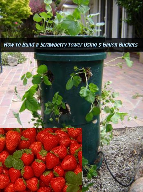 Pin By Melanie Harris On Garden Planting Strawberry Tower Garden