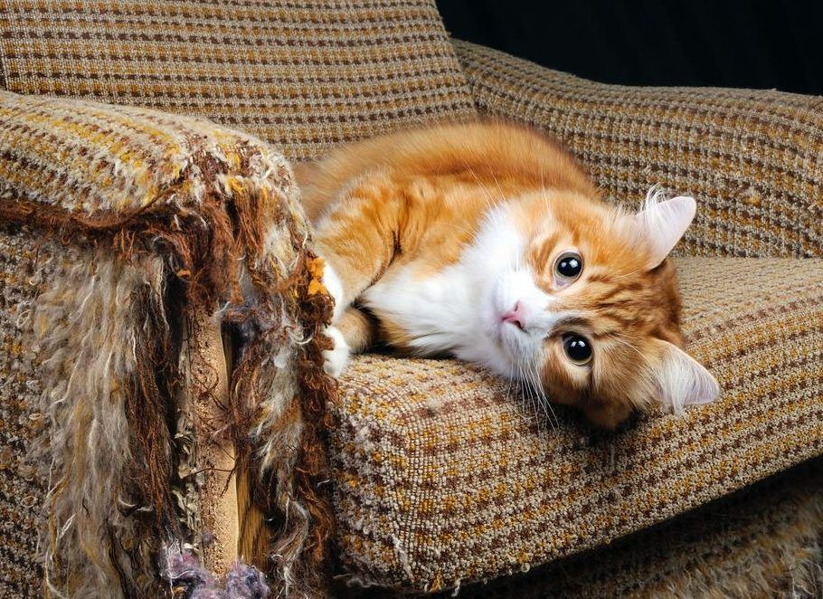 Animal experts give insight into unusual cat behaviors