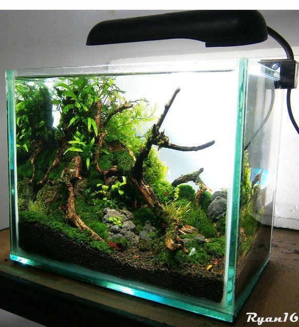 My Simple Nano Nano Aquariums Aquatic Plant Central
