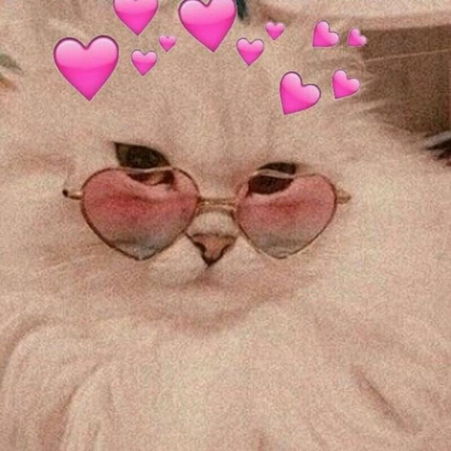 7 Whatsapp Cute Cat Wallpaper Cute Baby Cats Cute Cat Memes