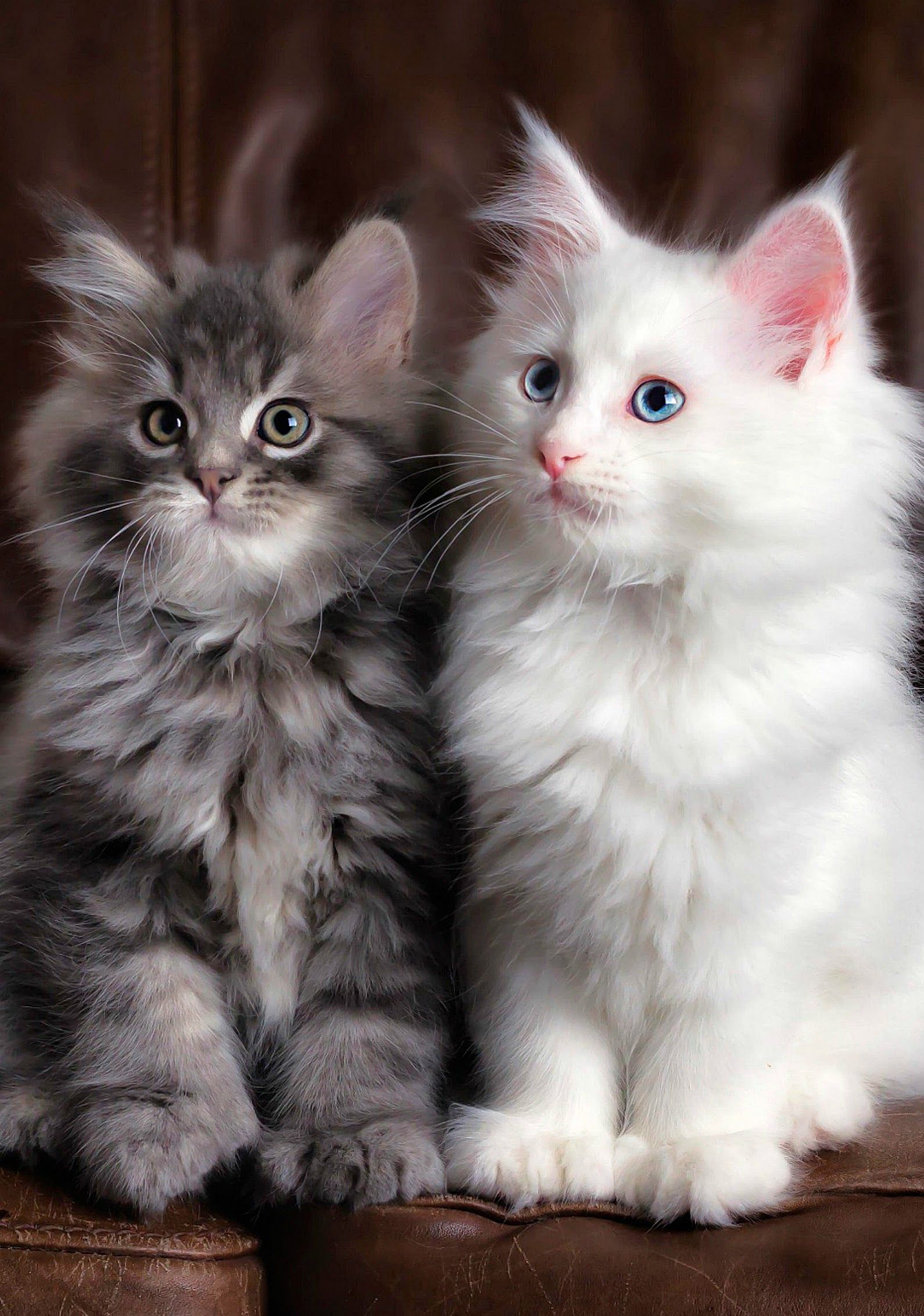 Bad Breath In Cats Can Be A Red Flag For Tooth Decay Or More Serious Conditions Want To Know More Click On The Image Kittens Cutest Cute Animals Cats