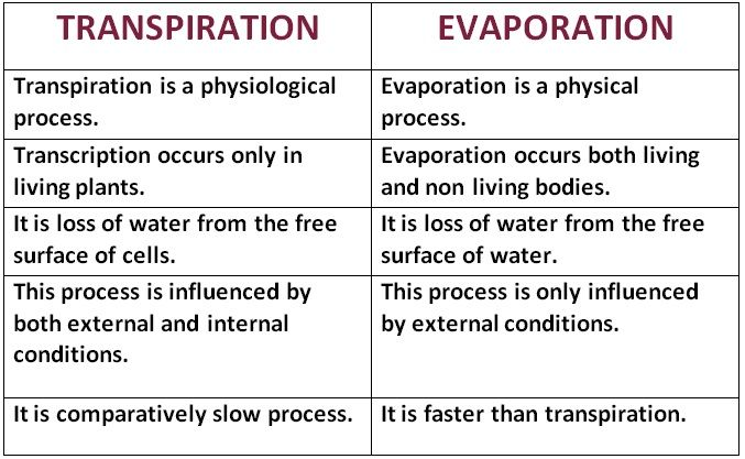 Difference Between Transpiration And Evaporation Plant Physiology