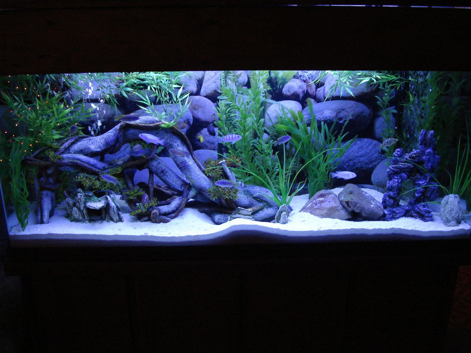 Tanks Amp Fish On Pinterest African Cichlids Cichlids And Fish Tanks