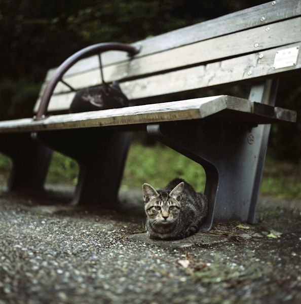 Bench by yocca