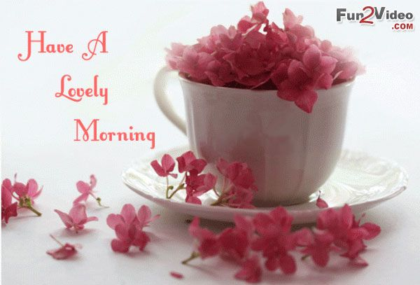 Lovely Morning Beautiful Flowers To Wish Good Day New Morning With
