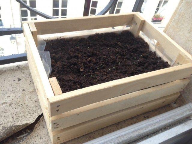 cagette bois kit pour faire pousser des fraises hema d co v g tale sur le balcon gardening. Black Bedroom Furniture Sets. Home Design Ideas