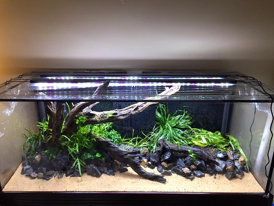 """Aquascape """"At the rivers edge"""" by Rory John Egan. Pic shared with The Aquatic Plant Society (TAPS) ...  Pin by Aqua Poolkoh"""