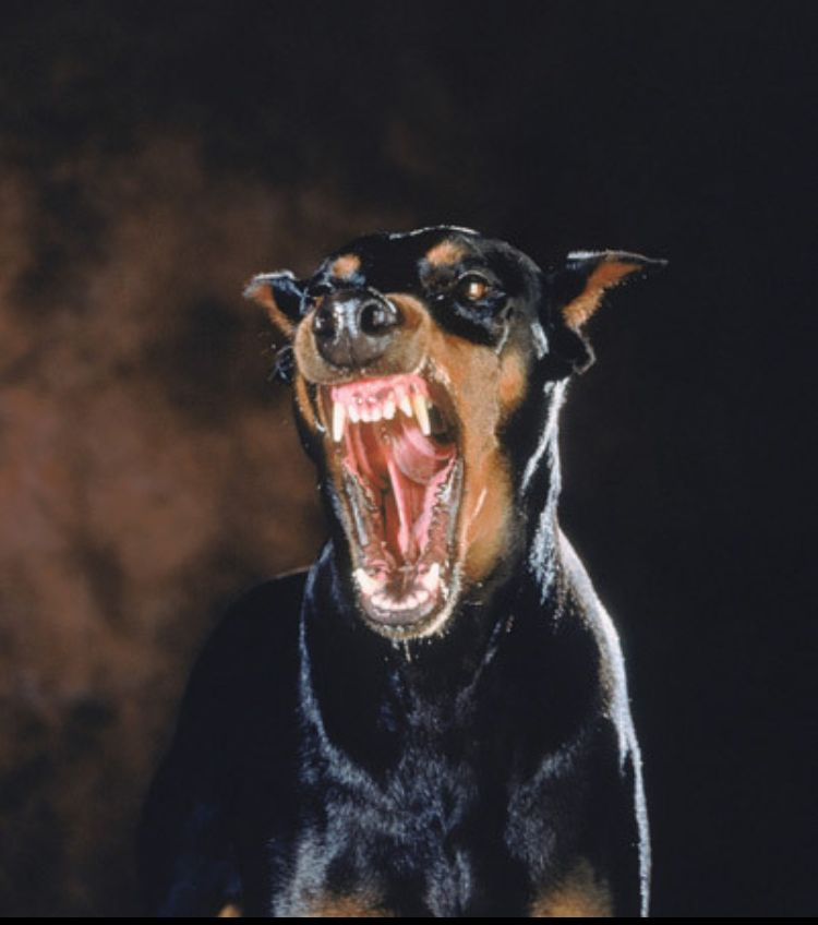 Pin by Gregory Mitchell on Flash   Scary dogs, Angry dog ... - photo#14