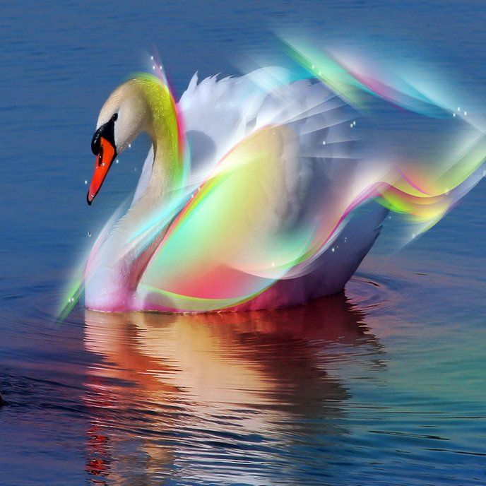 Pictures Of Beautiful Bedrooms And Living Rooms: A Beautiful Swan Shining Like A Rainbow
