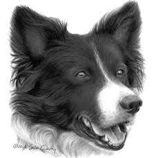 Uk Border Collie Fitting Database Dog Art Dogs Collie