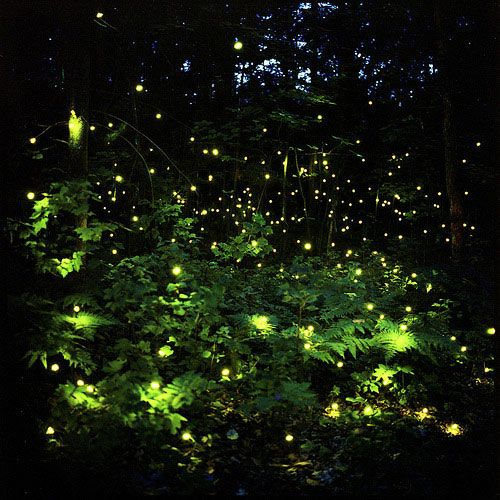 Catching Fireflies On A Southern Summer Evening With Images