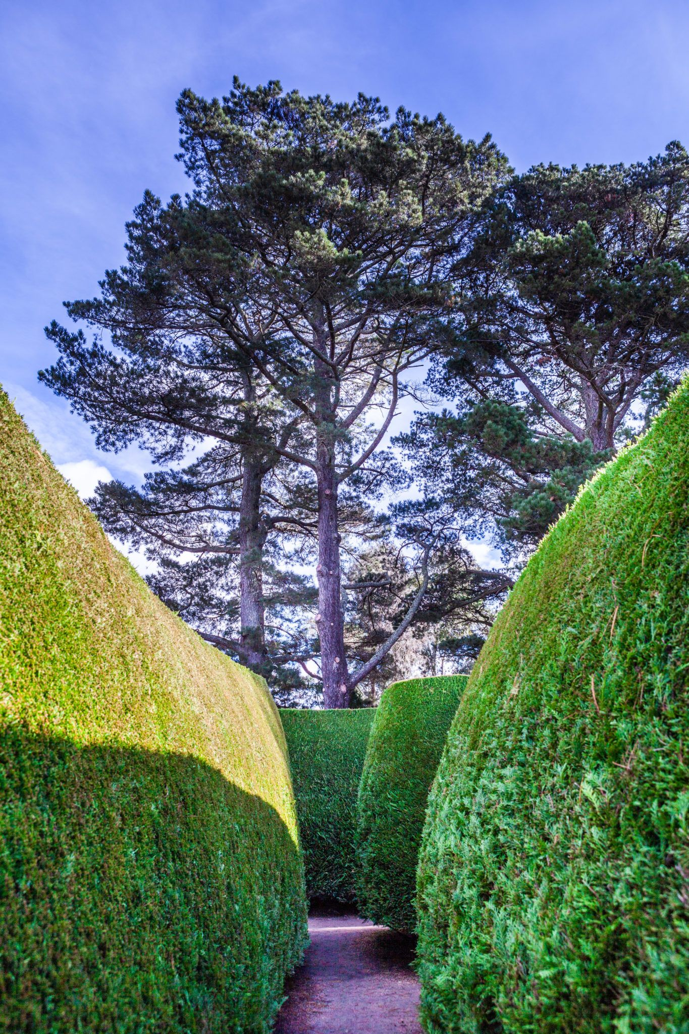 Tall trees and green garden with walkway vertical image