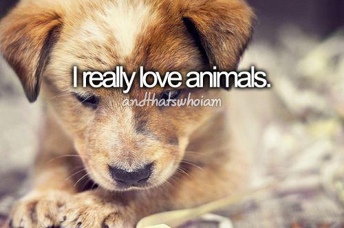 Resultado de imagem para i love animals tumblr