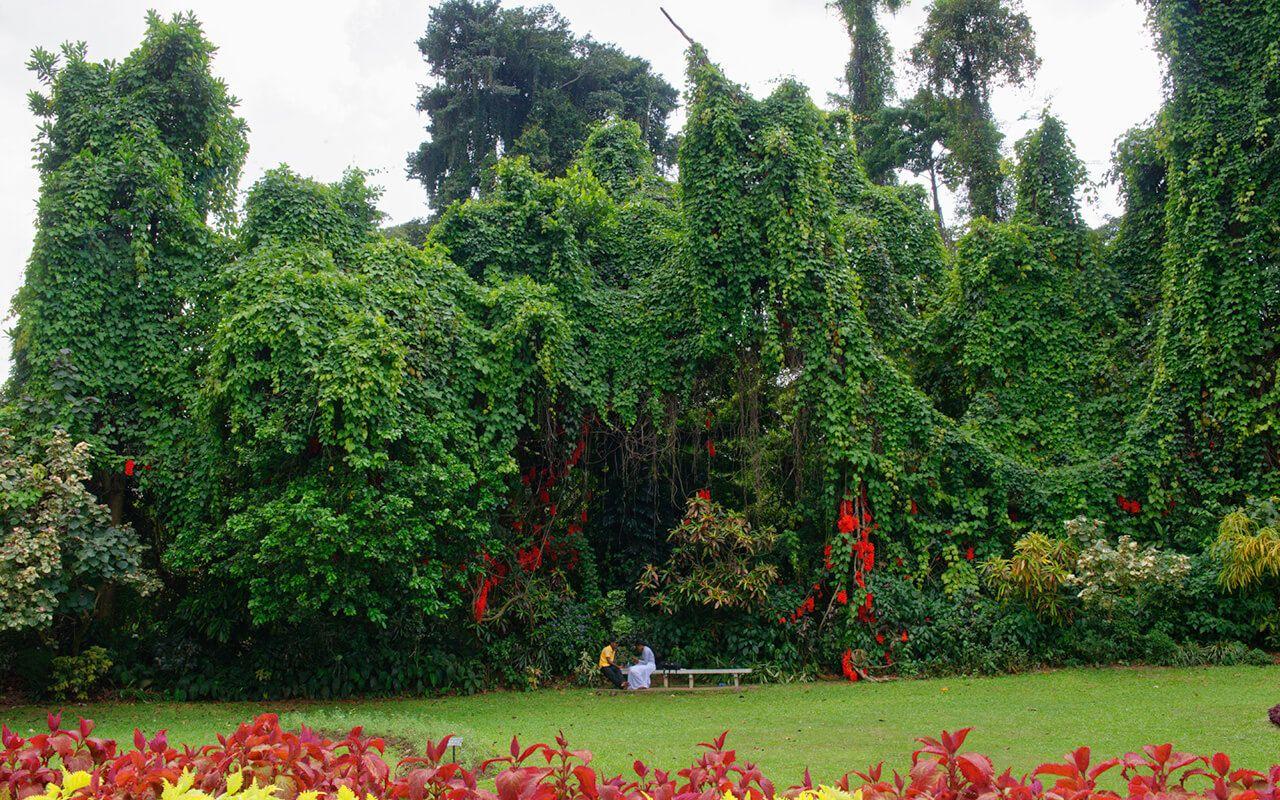lesterlost-travel-sri-lanka-peradeniya-botanical-gardens-thierry-couple (1)