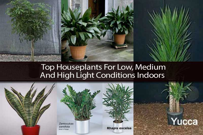 Top Houseplants For Low Medium And High Light Conditions 400 x 300