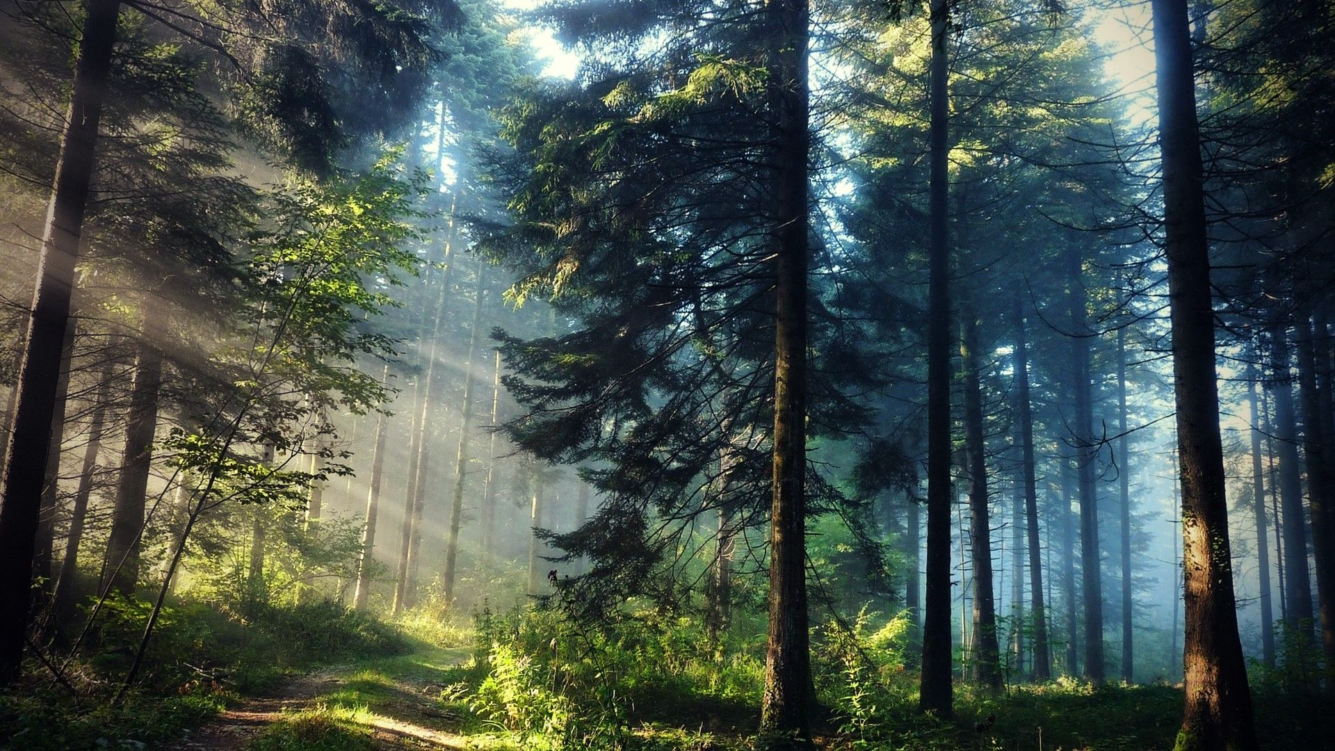 Sun ray through trees Forest wallpaper, Beautiful forest