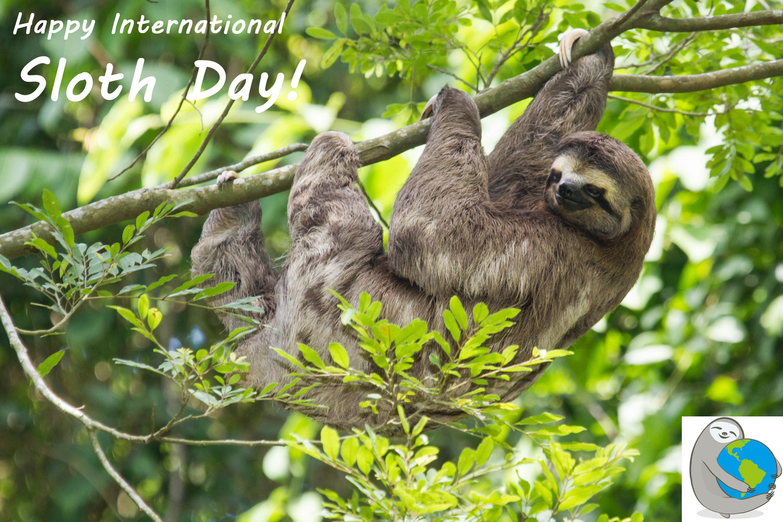 Oct. 20, 2016 International Sloth Day was created by