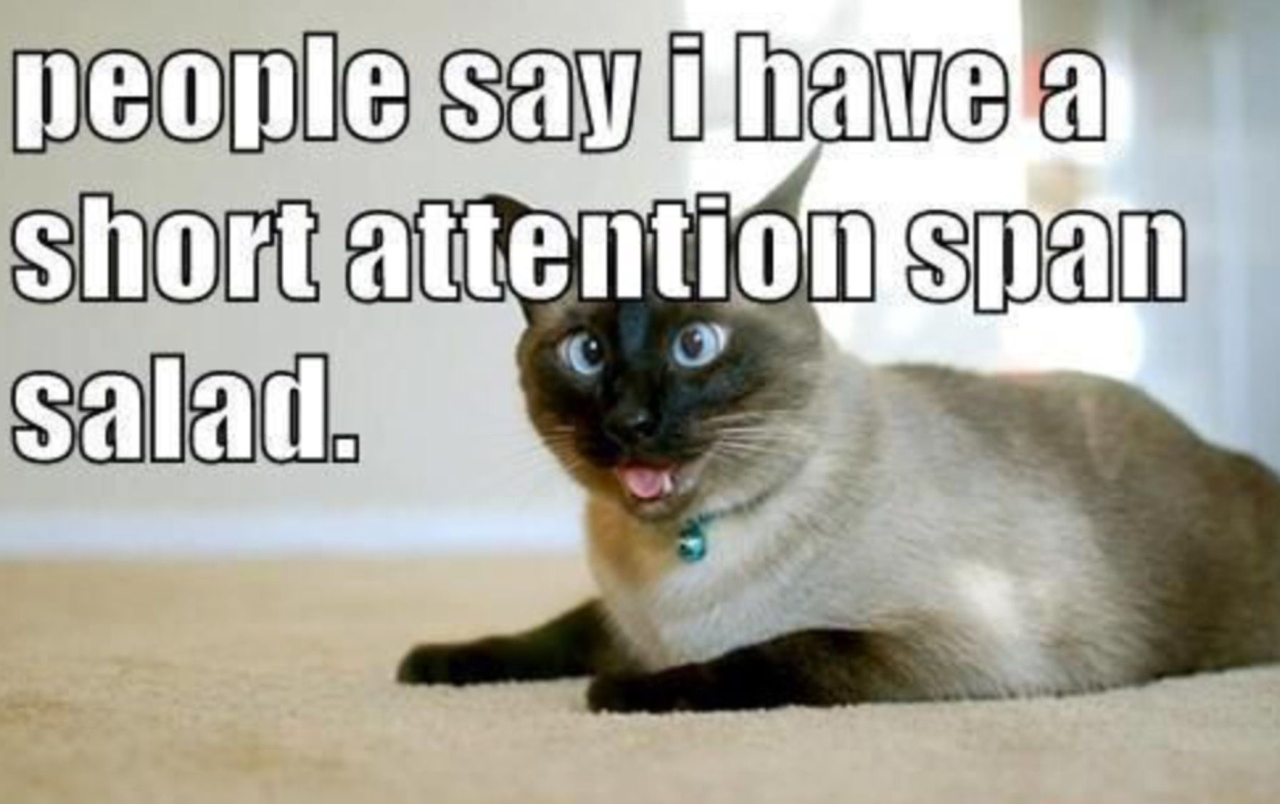 Pin by Jake Drexel on Funny Funny cat pictures, Funny