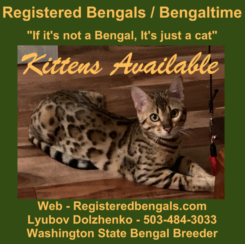 Bengaltime Cattery bengalkittens We are Registered