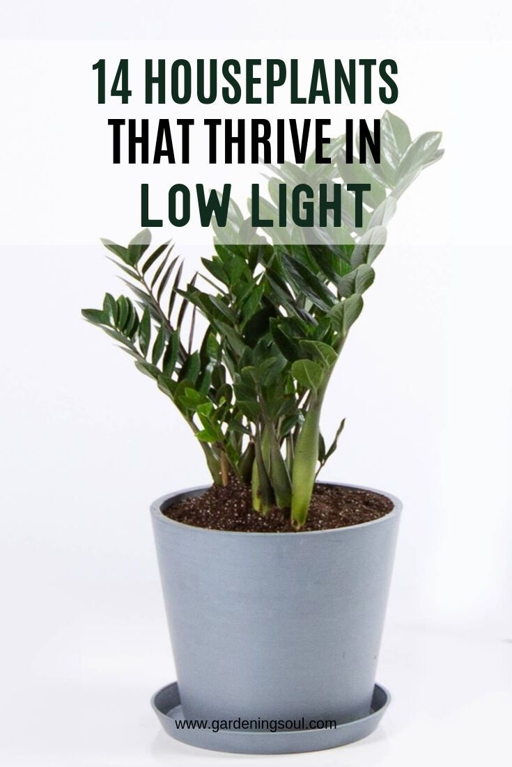 14 Houseplants That Thrive In Low Light Easy Care Indoor 400 x 300