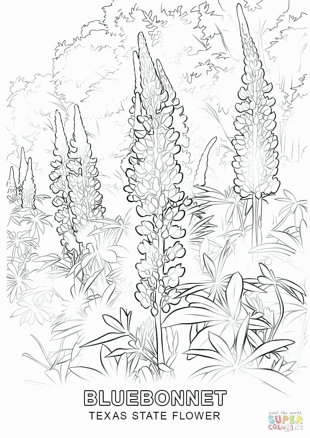 Pin By Jlamarca On State Flowers Flower Coloring Pages Coloring