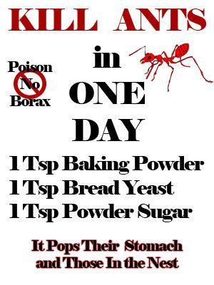 d0d284ab42901d1907bd5ecc0ed098ec - How To Get Rid Of Tiny Ants In Bathroom