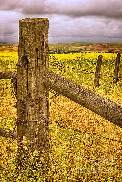 Barbed Wire On Fence Post Fence Rustic Fence Old Fences