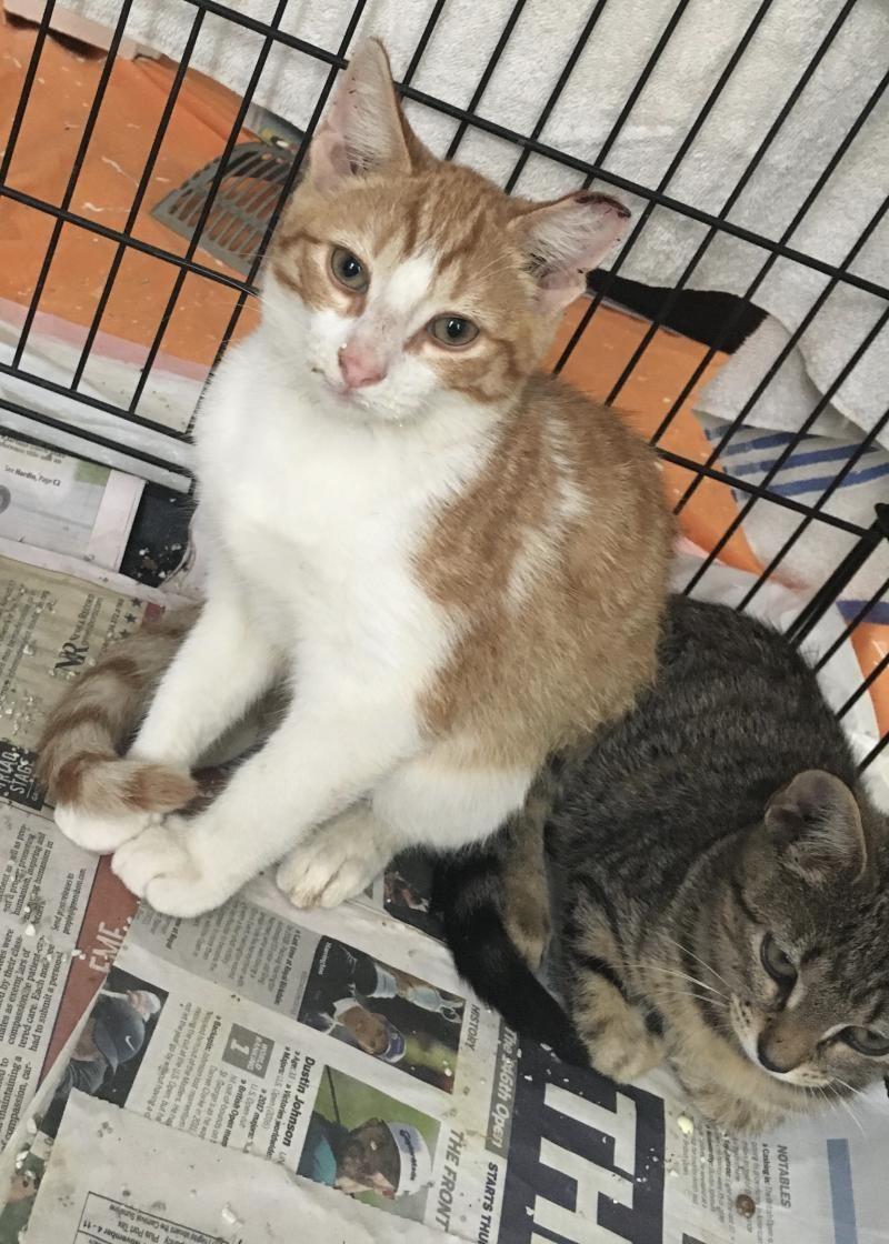 Adopt Buckaroo on Petfinder Pet adoption, Adoption, Pets