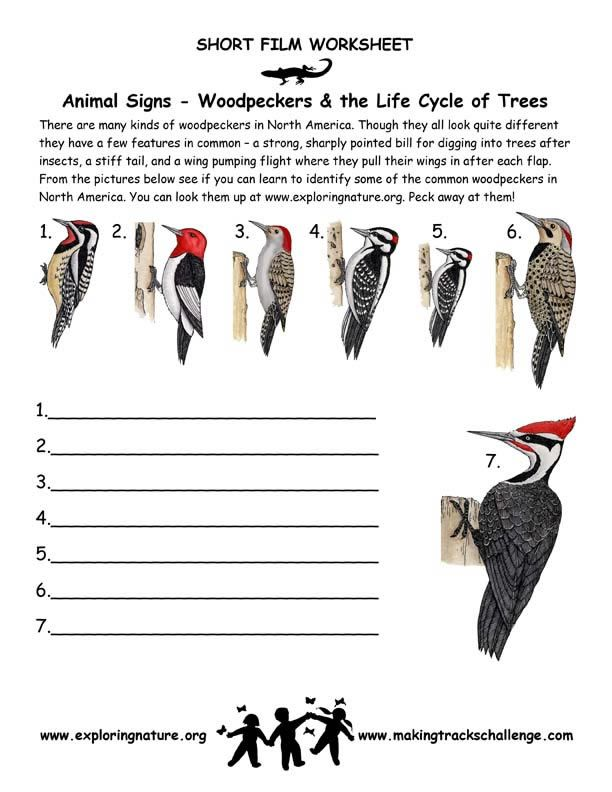 About Woodpecker