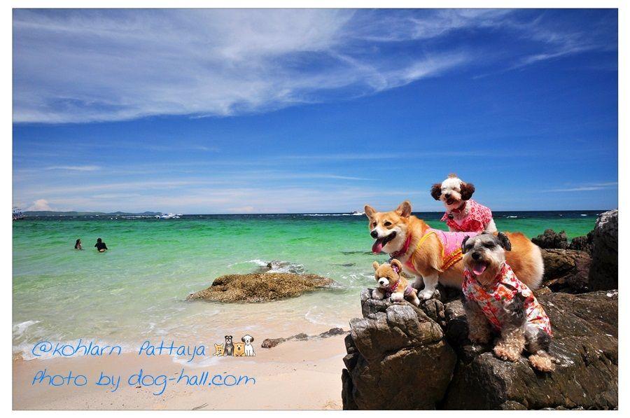 Ko Lan, #Pattaya Thailand #Travel #Thailand ++ English language support >> http://ThailandHolidays7.com
