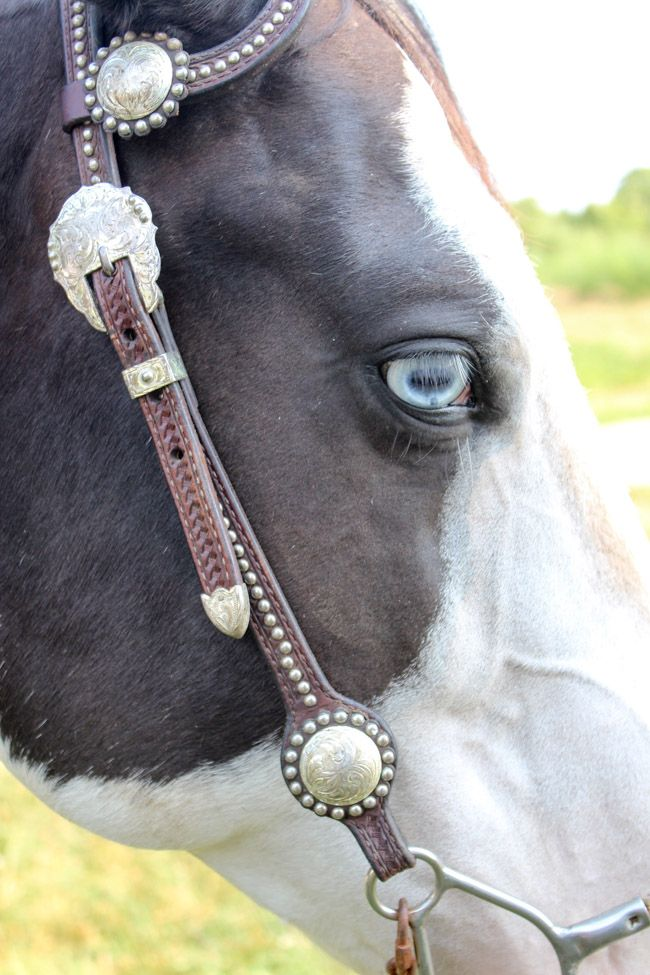 Black and White Paint Mare with Blue Eyes - My Thoughts on Leasing a Horse   Horses & Heels
