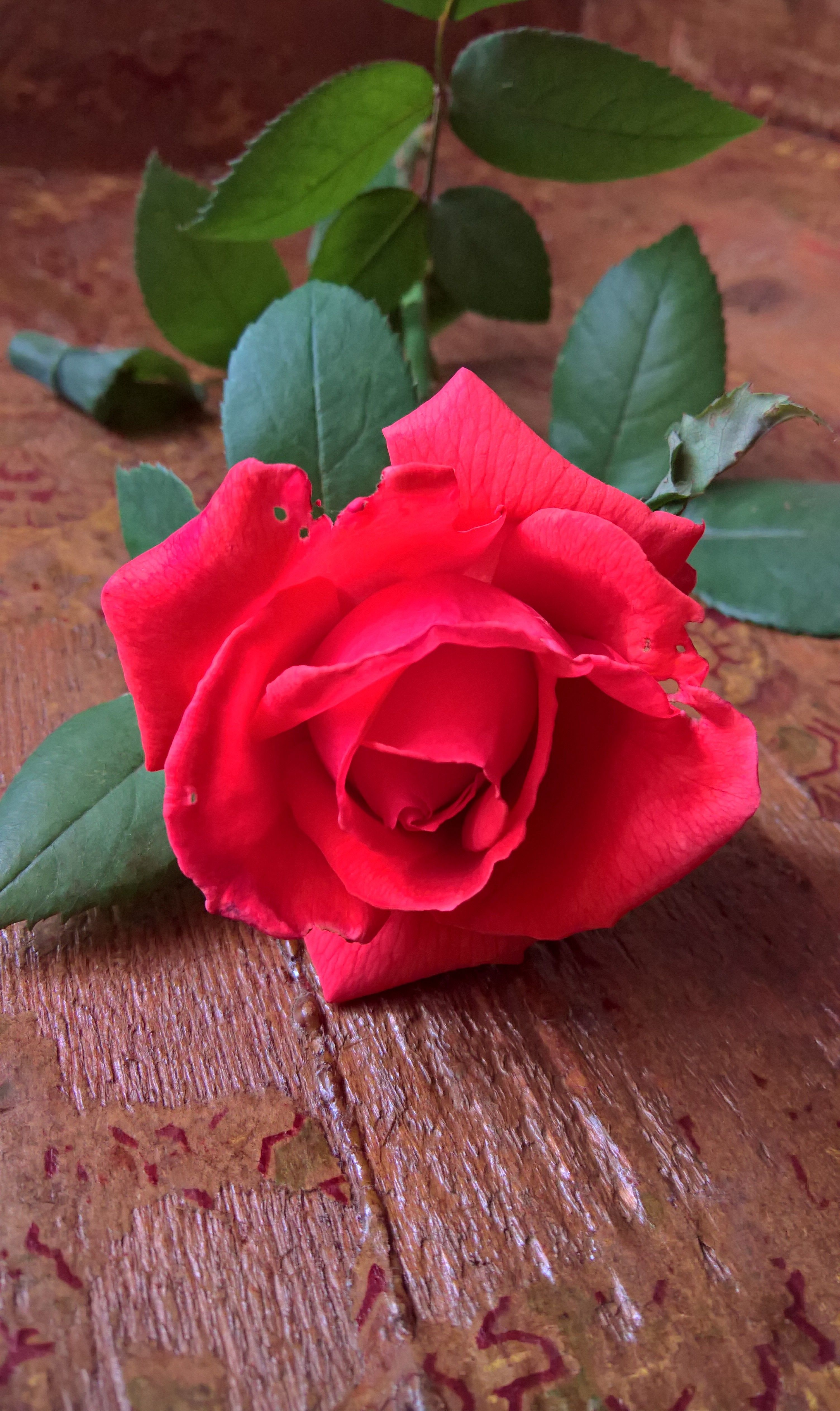 Pin by Migdalia Valentine on rosas | Pinterest | Flowers, Pretty ...