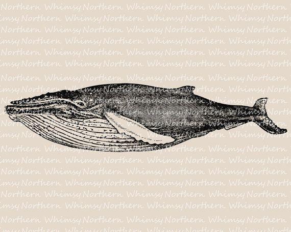 Whale Clip Art Nautical Clip Art Humpback Whale Illustration Vintage Whale Image Ocean Clipart Digital Stamp In 2020 Whale Illustration Whale Ocean Clipart