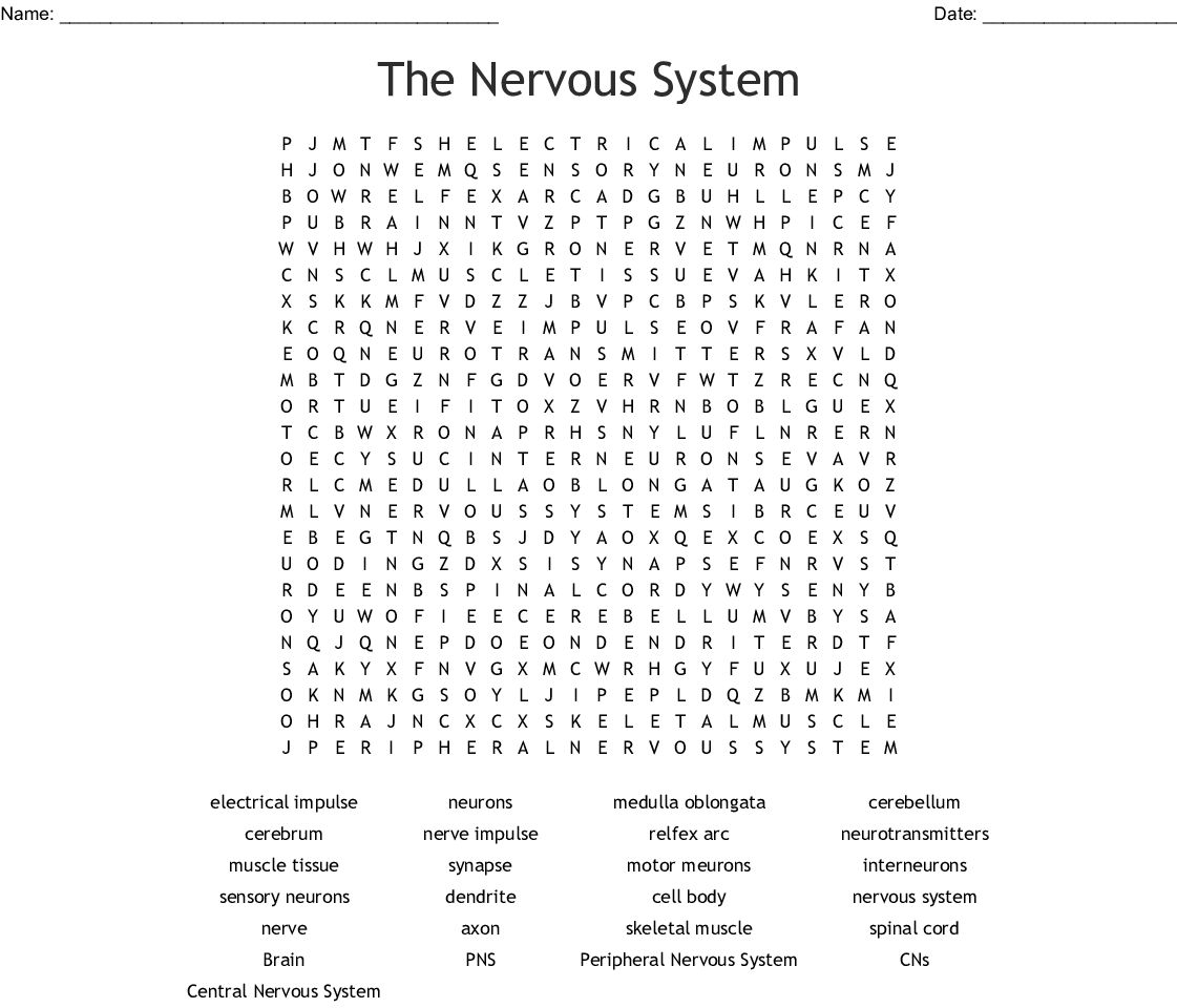 Chapter 7 The Nervous System Worksheet Answers In
