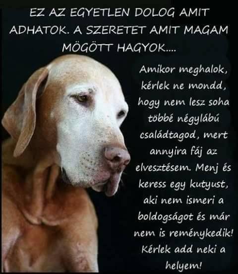 meghalt a kutyám idézetek Pin by Golden Flower on K ♡ KutyaBarat