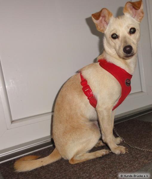 Tierschutzverein Hunde Brucke E V Hunde Tiere Tiere Suchen
