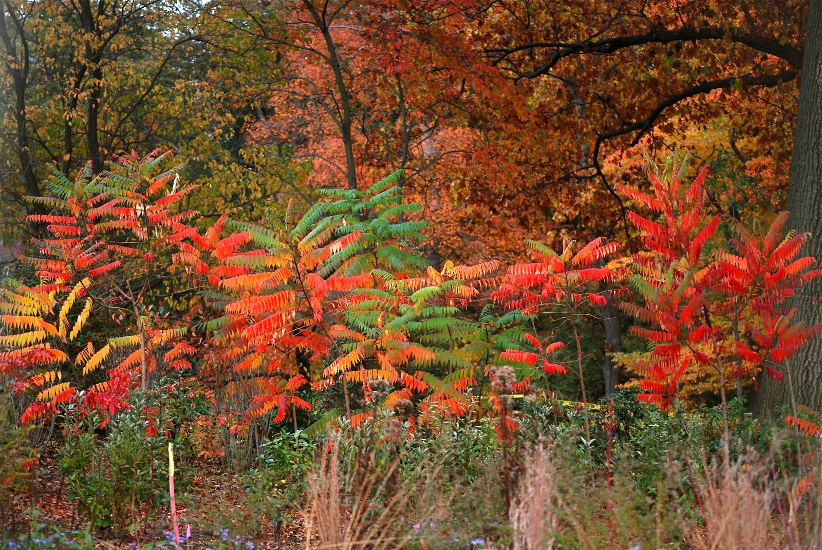 Botanical Gardens virgin foliage   Fall (leaves & Fall fashion ...