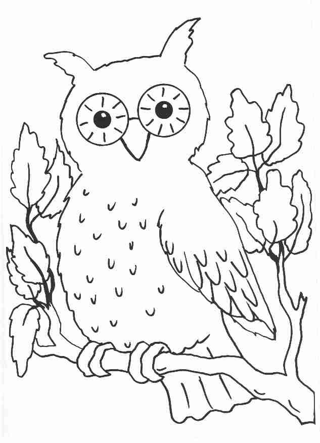 owl on branch | Ausmalbilder | Pinterest | Window color vorlagen ...
