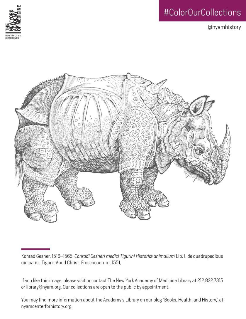 Click to download the PDF coloring sheet featuring the rhino in