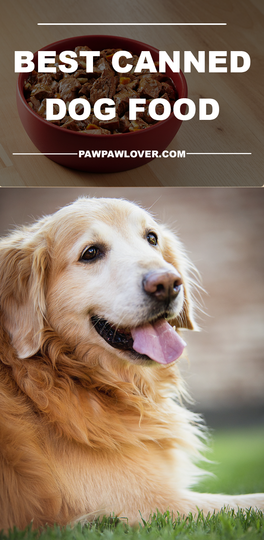 10 Best Dog Food Brands Dry Canned 2020 Dog Food Reviews Dog Training Best Dog Food Wet Dog Food