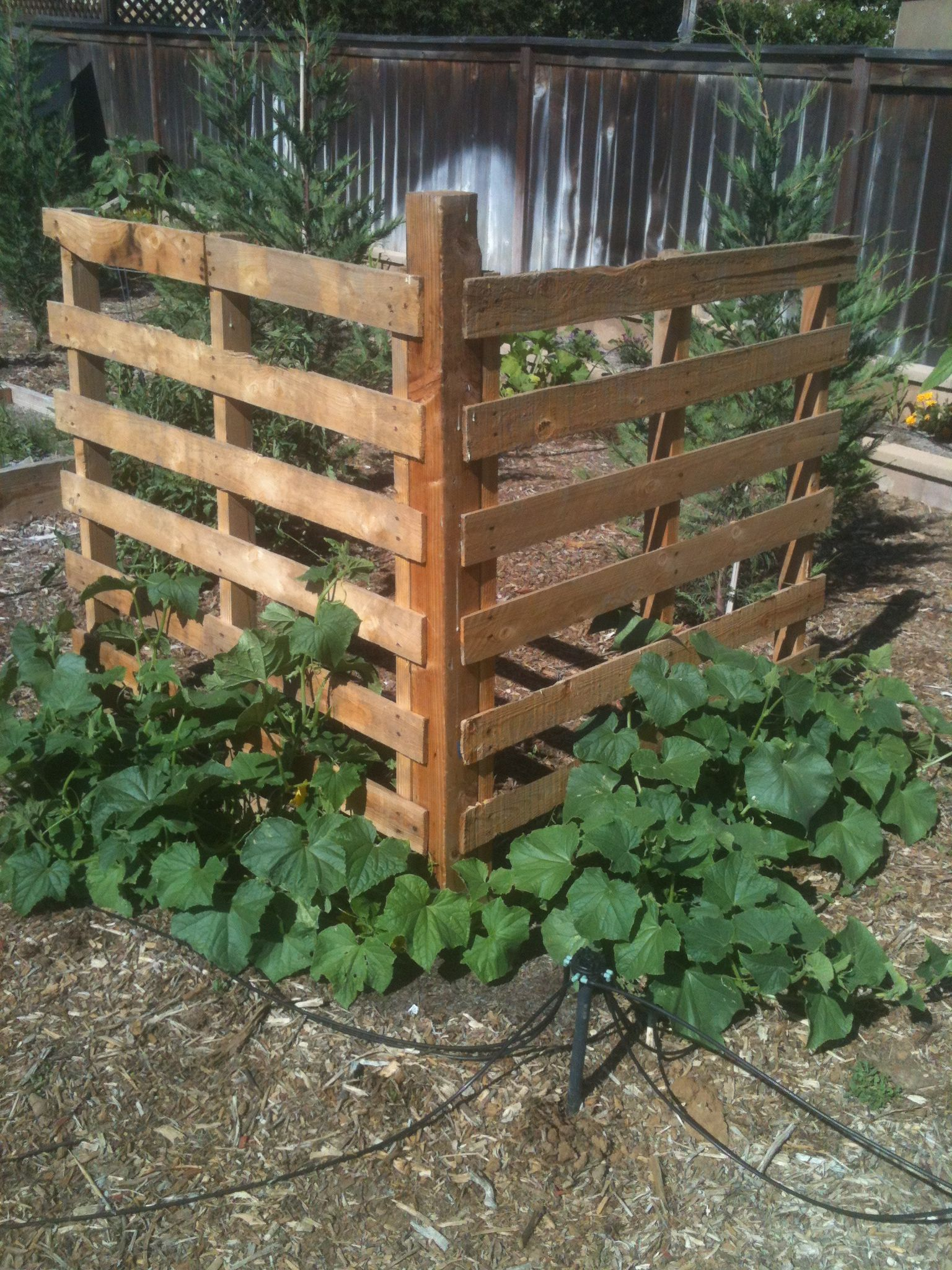 Cucumber Trellis Ideas Part - 40: Cucumber Trellis From Pallets. I Wonder If This Would Work For Tomatoes.