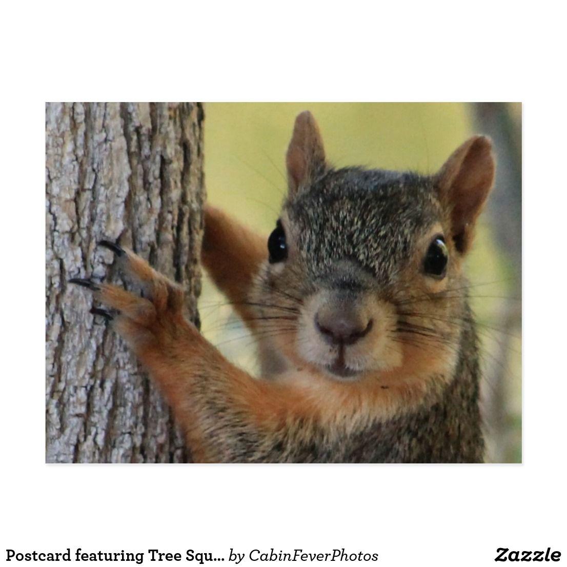 Postcard featuring Tree Squirrel Squirrel