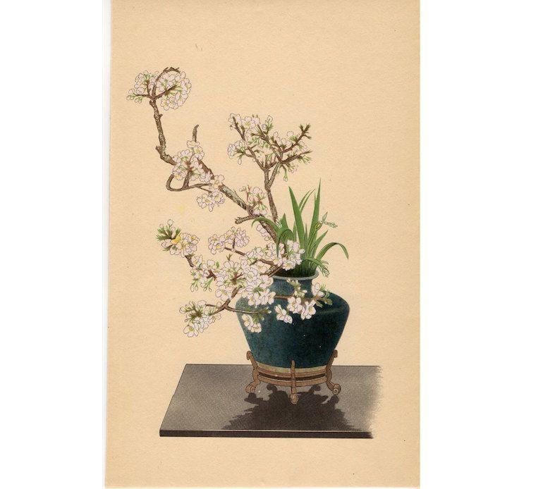 1935 Ikebana Anese Flower Arrangement Print Original Vintage Botanical Lithograph Cherry Iris Flowers By