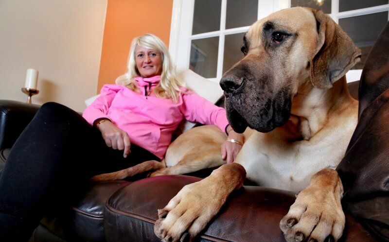 No One Had Ever Crossed Paths With Great Dane Who Shared The