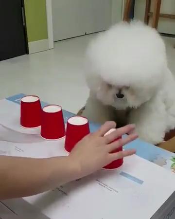 Photo of Dieser kleine Puppenspieler nimmt IMMER die richtige Tasse!