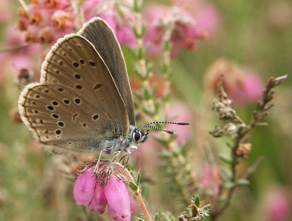 Foto vlinderstichting