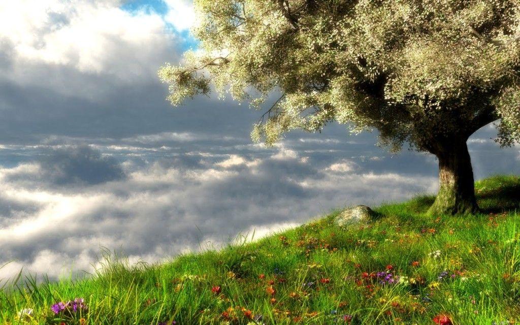 Spring Landscape Hd Wallpaper Desktop Wallpapers Spring Landscape Landscape Wallpaper Spring Scenery Best spring landscape hd wallpapers